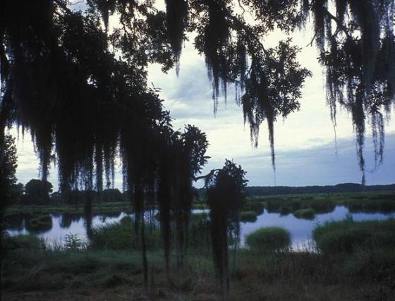 786px-eveningscenic_view_through_spanish_moss_covered_trees_in_a_wetland_area_of_coastal_south_carolina